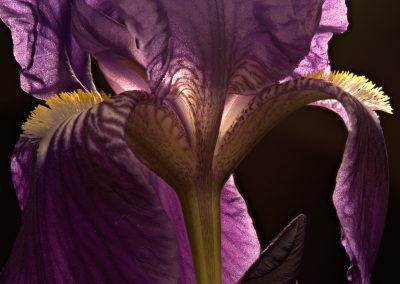 iris commun