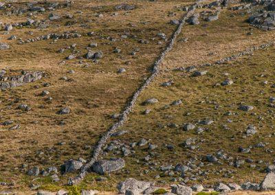 Aubrac des murets, près de Marchastel