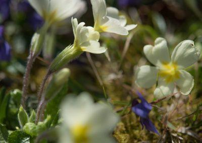 pelouse en liberté: coucous