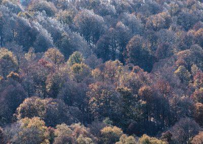 camaïeu d'automne et d'hiver, en octobre