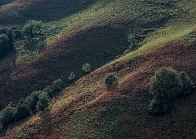 Trans-Aubrac - Les Ginestes - tapis de fougères