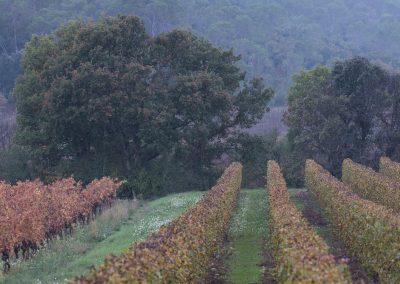 vignobles du Pic Saint-Loup